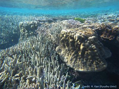 marine research topics